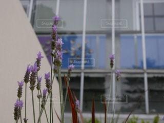 花の写真・画像素材[53848]