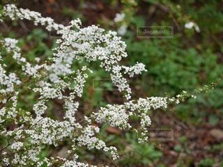 花の写真・画像素材[53897]