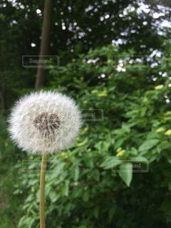 自然の写真・画像素材[286774]