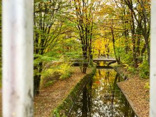 森のベンチの写真・画像素材[1616142]