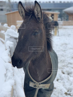 近くは雪の中に立っている馬のアップの写真・画像素材[1735079]