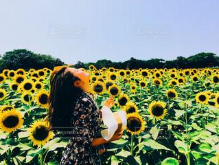 近くに黄色い花のアップの写真・画像素材[913886]