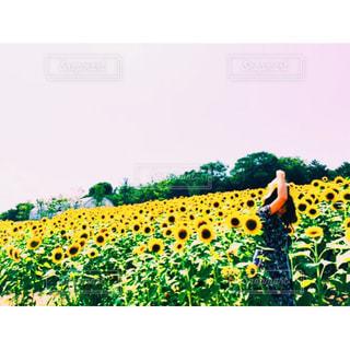 緑の葉と黄色の花の写真・画像素材[913889]
