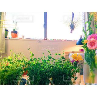 テーブルの上の花の花瓶の写真・画像素材[978318]