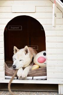 犬の写真・画像素材[238908]