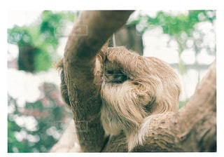 動物の写真・画像素材[245735]