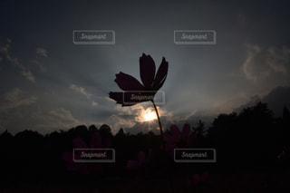 自然の写真・画像素材[247734]