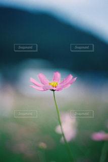 自然の写真・画像素材[247738]