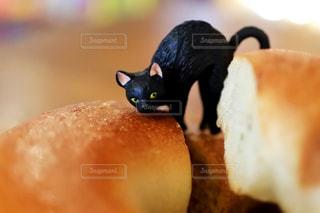 猫の写真・画像素材[364646]