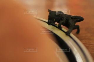 猫の写真・画像素材[364647]