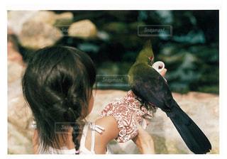 子ども,鳥,子供,仲良し,インコ,動物園,フィルム,オウム,ツーショット