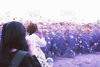 女性,花,花畑,ピンク,コスモス,パープル,シャボン玉,フィルム,友達,ツーショット,2人