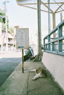 男性,猫,ねこ,フィルム,仕事,昼休み,おじさん,作業着,ネコ,ツーショット
