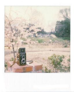 花の写真・画像素材[418907]