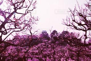 春の写真・画像素材[426443]