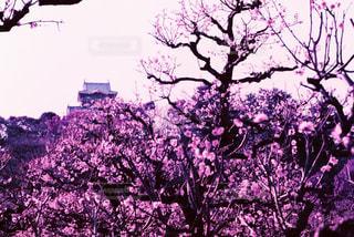春の写真・画像素材[426448]