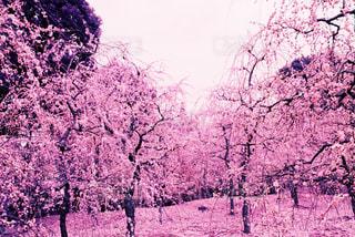 春 - No.426473
