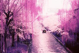 春の写真・画像素材[426484]