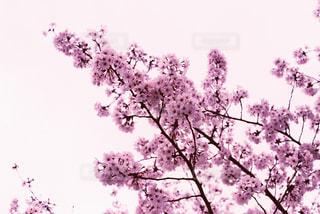 春の写真・画像素材[426523]