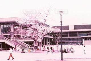 春の写真・画像素材[426528]