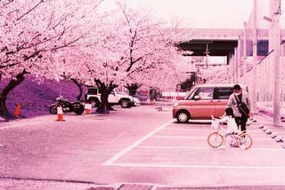 モデル,公園,春,桜,自転車,親子,女の子,サクラ,お花見,ポートレート,サイクリング,さくら