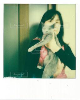 猫 - No.431816