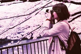 桜の写真・画像素材[452780]