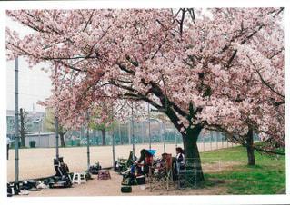 桜 - No.454411