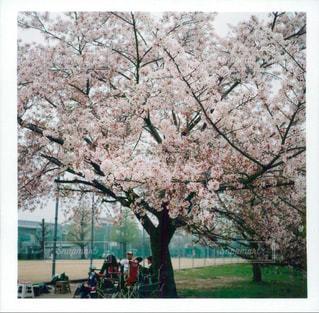 京都の写真・画像素材[455032]