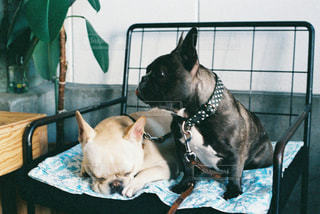 犬の写真・画像素材[485632]