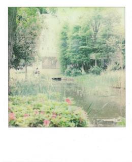 公園の写真・画像素材[485727]