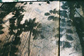 木の写真・画像素材[485776]