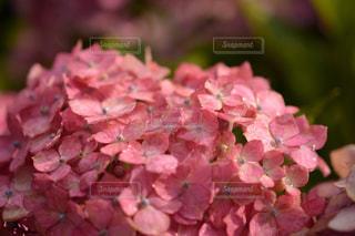 花の写真・画像素材[562235]