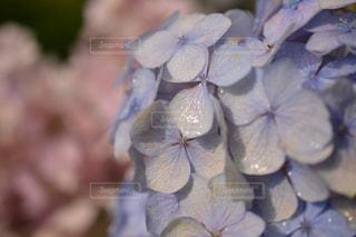 花の写真・画像素材[562236]