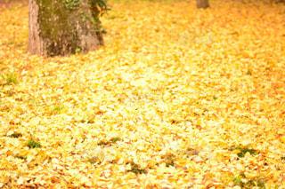 秋の写真・画像素材[596282]
