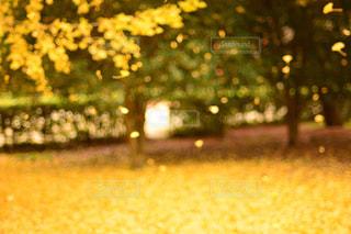 秋の写真・画像素材[596284]
