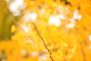 秋の写真・画像素材[596289]