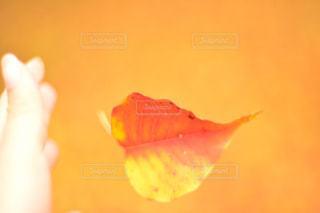 秋の写真・画像素材[596292]
