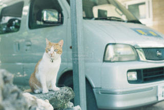 猫の写真・画像素材[697836]