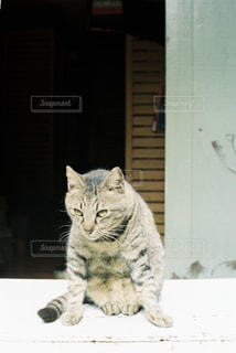 猫の写真・画像素材[697837]