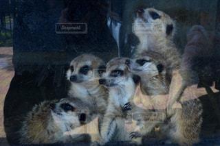 建物の前に座って羊のグループの写真・画像素材[740067]