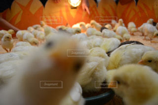 近くに食品のの写真・画像素材[740068]