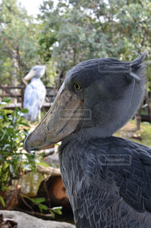 近くに鳥のアップの写真・画像素材[781480]