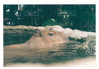 水中を泳ぐ動物の写真・画像素材[781490]
