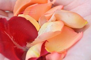 花を持っている手の写真・画像素材[807880]