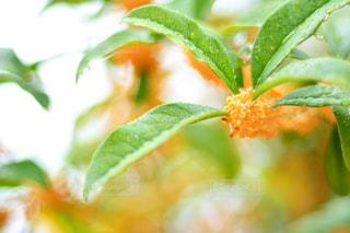 近くの植物のアップの写真・画像素材[813893]