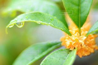 近くの緑の植物をの写真・画像素材[813894]