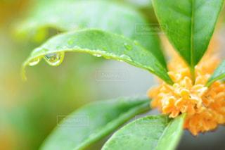 近くの緑の植物をの写真・画像素材[813896]