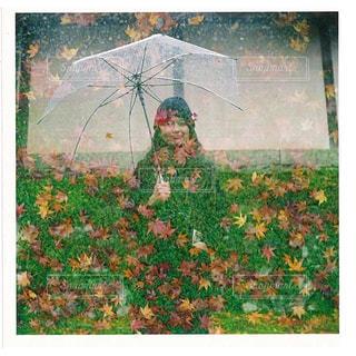 草のパッチの絵画の写真・画像素材[819609]