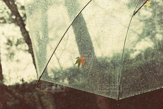 近くに傘のアップの写真・画像素材[819617]